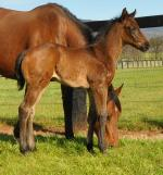 Breednet Gallery - More Than Ready (USA) Tyreel Stud