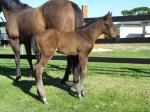 Breednet Gallery - Street Cry (IRE) Bell View Park