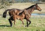 Breednet Gallery - Exceed and Excel (USA) Middlebrook Valley Lodge