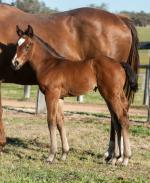 Breednet Gallery - Big Brown (USA) Middlebrook Valley Lodge