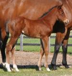 Breednet Gallery - Looking at Lucky (USA) Coolmore