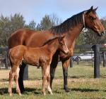 Breednet Gallery - Lookin at Lucky (USA) Coolmore