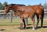 Breednet Gallery - High Chaparral (IRE) Coolmore