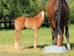 Breednet Gallery - More Than Ready (USA) Lakeview Resources