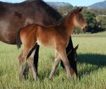 Breednet Gallery - Beneteau Middlebrook Station Thoroughbreds (for Darby Bloodstock)
