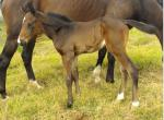 Breednet Gallery - Aetherius New Caledonia