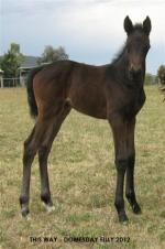 Breednet Gallery - Domesday Riversdale Farm