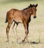 Breednet Gallery - Duke of Marmalade (IRE) Middlebrook Valley Lodge
