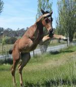 Breednet Gallery - Gonski Serendipity Stud Farm, NSW