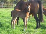 Breednet Gallery - Dr Doute's Ridgeview Park