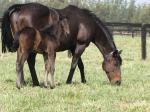 Breednet Gallery - Lonhro Amarina Farm