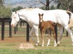 Breednet Gallery - Pluck (USA) Amarina Farm