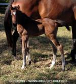Breednet Gallery - Congrats (USA) Riversdale Farm