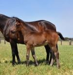 Breednet Gallery - Uncle Mo (USA) Coolmore