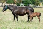 Breednet Gallery - Commands Willow Park