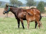 Breednet Gallery - Exceed and Excel Willow Park