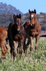 Breednet Gallery - Street Cry (IRE) Segenhoe Thoroughbreds
