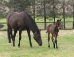 Breednet Gallery - Pierro Newgate Farm
