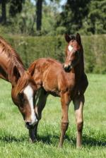 Breednet Gallery - Rock 'n' Pop Trelawney Stud, NZ