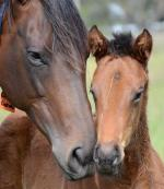 Breednet Gallery - Turffontein Blue Gum Farm