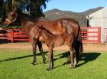 Breednet Gallery - Fastnet Rock Bylong Park Thoroughbreds