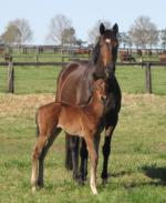Breednet Gallery - Red Giant (USA) Newgate Farm