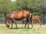 Breednet Gallery - Fastnet Rock Newgate Farm