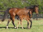 Breednet Gallery - I Am Invincible Newgate Farm
