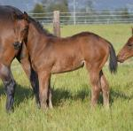 Breednet Gallery - Elvstroem Blue Gum Farm