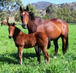 Breednet Gallery - Wanted Segenhoe Thoroughbreds for Burnewang North