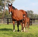 Breednet Gallery - Street Cry (IRE) Segenhoe Thoroughbreds for Fairway Thoroughbreds