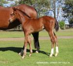 Breednet Gallery - Street Cry (IRE) Sledmere Stud