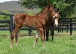 Breednet Gallery - Wanted Yallambee Stud