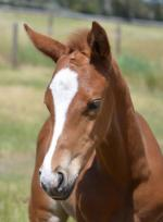 Breednet Gallery - Purrealist Blue Gum Farm