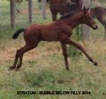Breednet Gallery - Stratum Riversdale Farm