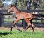 Breednet Gallery - Congrats (USA) Kitchwin Hills