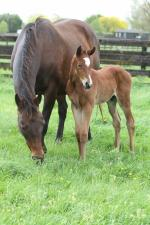 Breednet Gallery - Rip Van Winkle (IRE) Windsor Park, NZ