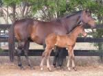 Breednet Gallery - Foxwedge Newgate Farm