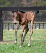 Breednet Gallery - Commands Kitchwin Hills