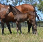 Breednet Gallery - Pierro Coolmore