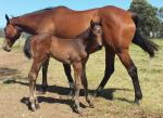 Breednet Gallery - Dalakhani (IRE) Fairview Park Stud