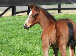 Breednet Gallery - Pluck (USA) Vinery Stud