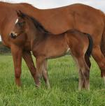 Breednet Gallery - Rubick Coolmore, NSW
