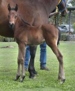 Breednet Gallery - I Am Invincible Kitchwin Hills