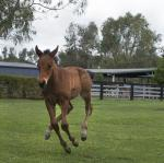 Breednet Gallery - Uncle Mo (USA) Kitchwin Hills