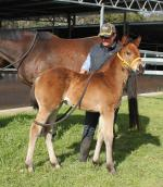 Breednet Gallery - Safeguard Oakland Park Stud, WA