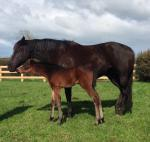 Breednet Gallery - Reliable Man (GB) Onyx Thoroughbreds, NZ