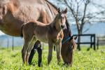 Breednet Gallery - Sebring Holbrook Thoroughbreds