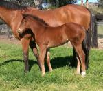 Breednet Gallery - The Factor (USA) Davali Thoroughbreds