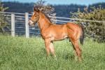Breednet Gallery - Shooting to Win Ashleigh Thoroughbreds, NSW